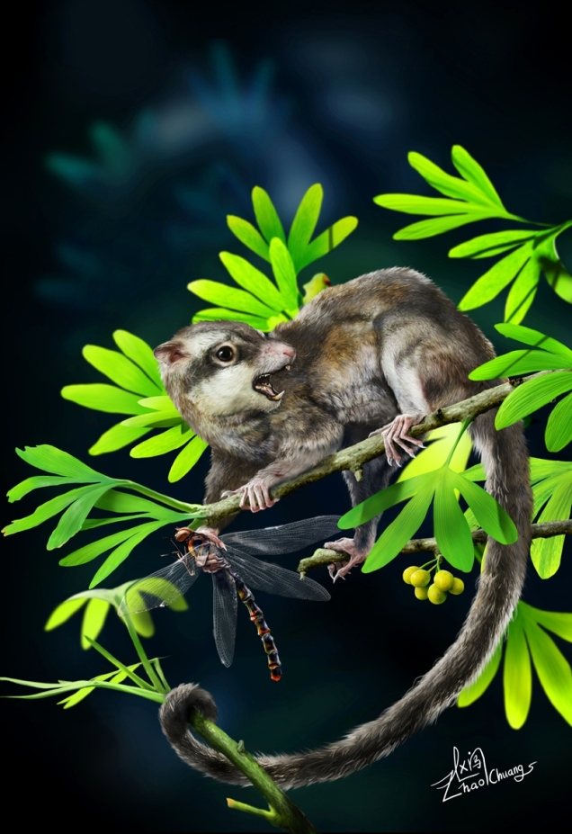 Zhao Chuang/Jin Meng et al.'s reconstruction of Arboroharamiya. Image from http://www.nature.com/news/fossils-throw-mammalian-family-tree-into-disarray-1.13522