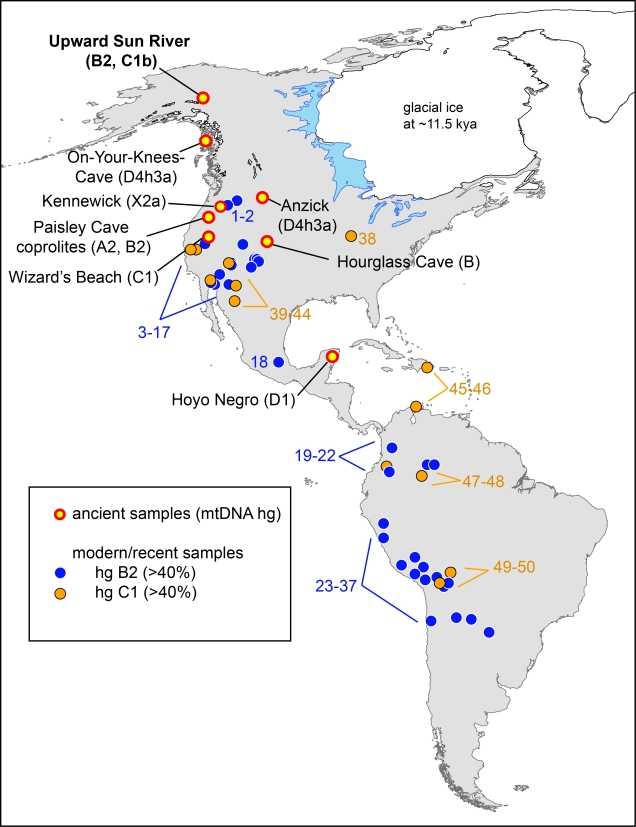 Tackney et al. 2015 Figure 1. Geographic map of reported Native American populations with >40% C1 or B2 haplogroup frequencies, as well as locations of archaeological sites discussed. The locations of the Upward Sun River site, as well as the seven previously reported archaeological sites dated at >8,000 y B.P. with successfully genotyped human mitochondrial DNA lineages, are listed on the map (with reported haplotypes). Reported populations of ≥ 20 individuals with ≥ 40% C1 (yellow) or B2 (blue) are shown.